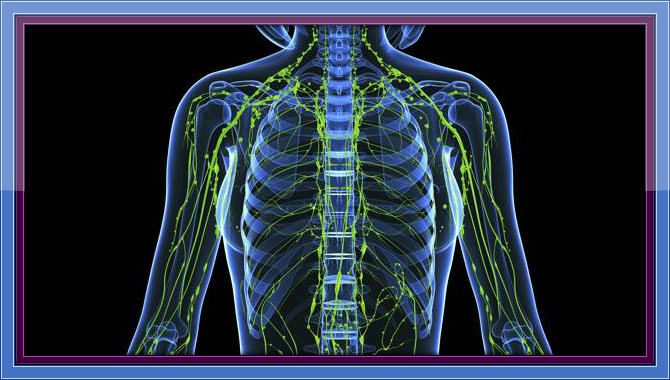 Healing at the Cell Level Part 5 - Lymphatic System A